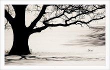 СТАРЫЙ ДУБ / ...кто-то фотку уже видел,.. но всё равно дуб! :)