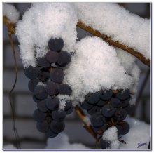 Яблоки(зачеркнуто) виноград в снегу / Беларуский виноград. Приятного просмотра...