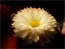 Цветок жизни / Мягкая фотография