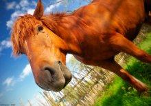 ...летняя лошадк0 / ...разбавил серую зиму яркими красками!!! ...и ещё, приветствуются весёлые комментарии)))