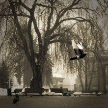 Я милисекунда из жизни зимнего парка / я уже улетела ...