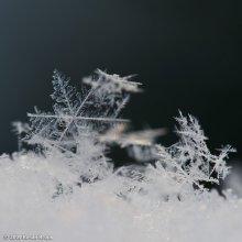 Снег / Советы по кадрированию пошли на пользу. Кадрированный вариант.