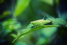 В траве сидел кузнечик.. / .. зелёненький он был! :)