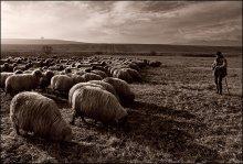 Пастырь / где-то в Трансильвании