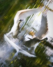 Три птицы / ~/~ ~/~ ~/~