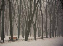 Туманное утро / Сегодня в городе туман
