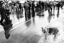 Про людские толпы и  одиночество собак... / см. на черном