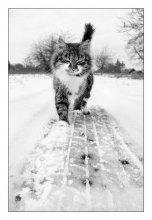 весенняя котофота / топая по мартовскому снегу и щурясь от весеннего солнца :)