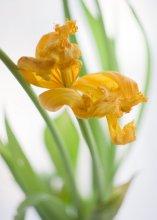 Когда приходит весна, радуешься даже таким кренделькам... / С приходом НАСТОЯЩЕЙ весны вас, фотоклубовцы!