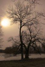 Залесьсе / дрэва над сажалкай у парке Агінскіх