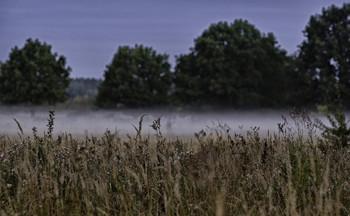 Тумани лугові... / 22.08.2021. річка Десна.
