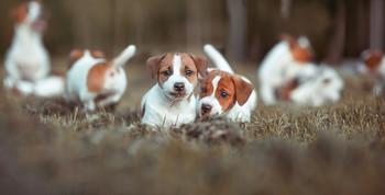 Жизнь собаки зависит от породы хозяина..) / ...