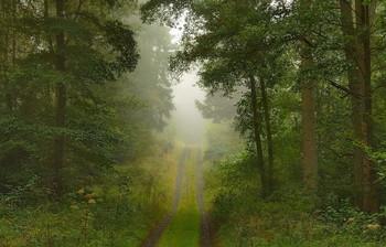 Дорога в туман..... / Осенний пейзаж. Утро в лесу .