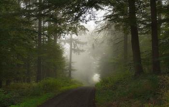 Туманный сентябрь / Лесное утро в сентябре .