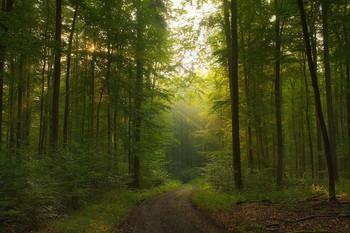 Утро в лесу / Осенний лесной пейзаж.