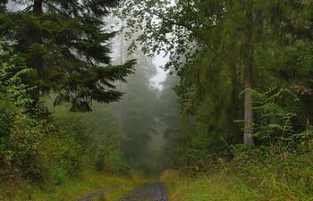 По дороге в осень.. / Осеннее утро в лесу.