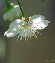 Весенняя банальность.... / за окном весна....