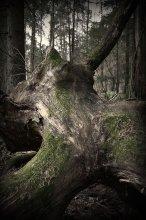 Эротизм / Просто такое старое поваленное дерево.