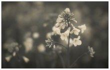 / в цвете тут: http://photoclub.by/work.php?id_photo=117461#t