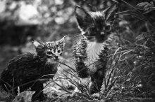 Мокрые коты / серия фотографий посвящается Виктору Байковскому   http://joldersman.livejournal.com/13457.html#cutid1