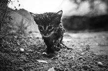 а я иду шагаю по земле... / серия фотографий посвящается Виктору Байковскому  http://joldersman.livejournal.com/13457.html#cutid1