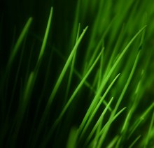 Green / ......