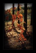 Янтарная / Люблю осень. Ее краски, свет…