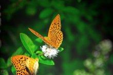 Butterfly / *************