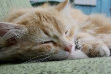 Богатырский сон / Мой кот