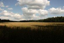 Поспели / Просто красивое поле