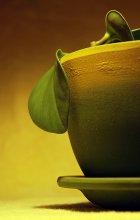 побег из горшка / желто-зеленая жизнь