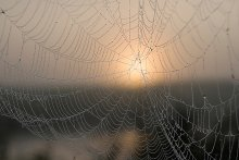 Однажды на рассвете... / ...или о недолгой жизни паутин