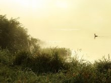 Теплое  утро... / Природа Беларуси летом