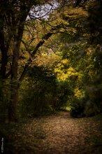 Осенние тропинки / утренняя прогулка в парке...