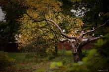 Портрет старого дерева / Не знаю почему, но к этому кадру я отношусь именно, как к портрету...