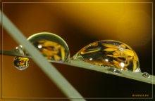 вода - это жизнь / капли дождя преломляющие цветы