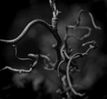 Спутанность / в ботанике