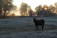 Первый заморозок / Утро. Лошадь. Прохладно.