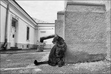 хвост трубой / закоулки собора святого Юра г.Львов