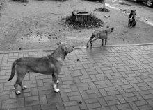 бездомные собаки / однажды в обед