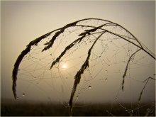 Кружева осени / Ночью бвл легкий заморозок. Туман и взошедшее солнце растопили льдинки, превратив их в росу