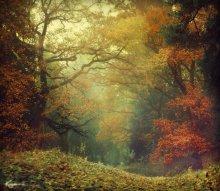 Осень / ......