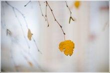 Прощание с осенью / Прощание с осенью или один в поле не воин.