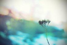 Геометрия цветов / Впечатлённая работами..