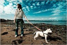 Walking the dog / .......