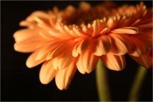 Orange love / ----------