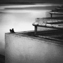 Одиночество вдвоём / Дыханье неба, тень заката, Как сладкий сон последний луч, Мерцанье звёзд и дымка-вата, Остатки злых и серых туч...  Встречать и провожать день вместе...