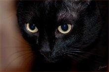 Гипноз / Есть в этих зверях что-то от черной магии...
