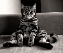 Барин / Это одна из самых любимых поз нашего кота =)
