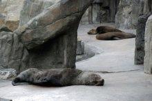 Офисный ленивец / Или солдат спит - служба идет. Зоопарк Праги